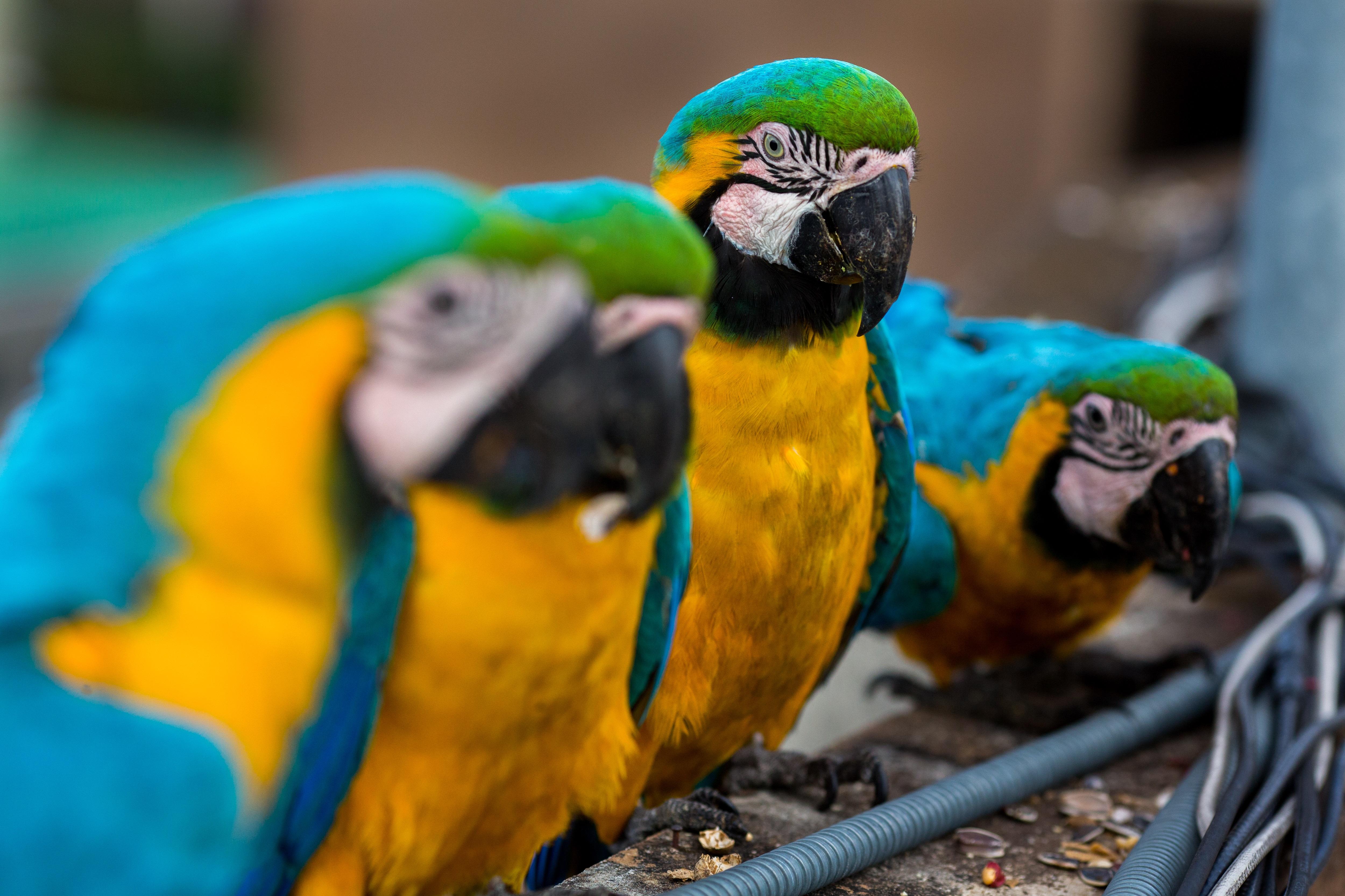 https://assets.sourcemedia.com/0f/53/9271682a4b4387ba4444d5c7cf0d/parrots-bloomberg.jpg