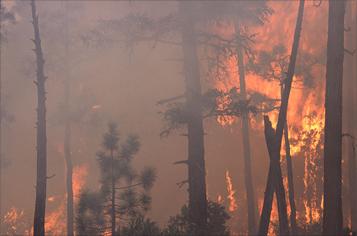 https://assets.sourcemedia.com/20/75/d73b60204eff96567b21bbfa2309/wildfire-357.jpg